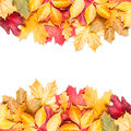 Autumn Leafs On White Background Stock Images - 32444254