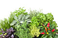 Fresh Kitchen Herbs Stock Images - 32469434