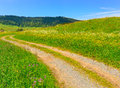 Road In A Meadow Of Flowers Stock Photo - 32493070