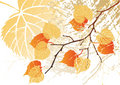 September Leaves Background Stock Photography - 3256872