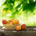 Ripe Tasty Apricots In The Basket On The Old Wooden Table Royalty Free Stock Image - 32511016