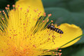 The Fly And The Flower Stock Image - 32519361