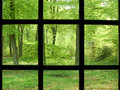 Spring Forest Through A Window Royalty Free Stock Images - 32522159