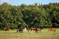 Horses On Pasture Stock Photography - 32534122