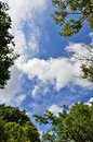 Blue Sky And Clouds And Verdure. Royalty Free Stock Photo - 32563735