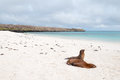Beach Scene With Two Galapagos Sea-Lions Stock Images - 32571984