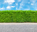 Tall Hedge With The Part Of The Gravel Road Royalty Free Stock Photos - 32578598