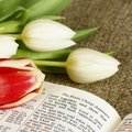 Easter Still Life Royalty Free Stock Photography - 32582757