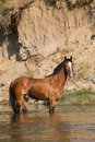 Brown Horse Standing In The Water Stock Photos - 32592193
