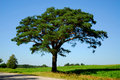 Pine Tree By The Road Stock Image - 3261681