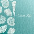 Vector Background With Sea Shells Royalty Free Stock Photo - 32626925