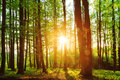Lovely Forest Sunset Royalty Free Stock Image - 32628096
