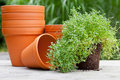 Plant Pots Royalty Free Stock Images - 32637549