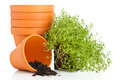 Plant Pots Royalty Free Stock Images - 32637629