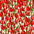 WATERCOLOR SEAMLESS PATTERN WITH PAINTED RED TULIPS Royalty Free Stock Images - 32661449
