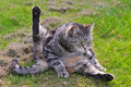 Cat In Funny Position Stock Photos - 32668813