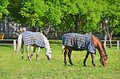 Horse In Pasture Royalty Free Stock Photography - 32671847