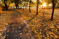 Warm Yellow Autumn Leaves Line A Park Path At Sunr Royalty Free Stock Photo - 32699745
