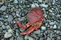 Dead Crab Stock Images - 3277624