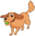 A Dog Playing With The Ball Royalty Free Stock Photography - 32709077
