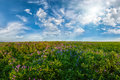 Landscape With Flower Meadow Royalty Free Stock Photo - 32717055