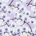 Seamless Pattern Of Flower Orchids Royalty Free Stock Photography - 32717507