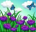 Two Blue Butterflies At The Garden With Violet Flowers Stock Photos - 32731153