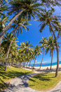 Coconut Trees At Nha Trang Beach In Vietnam 2 Royalty Free Stock Images - 32752449