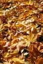 Autumn Stock Photo - 3284520