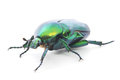 Green Beetle Royalty Free Stock Photo - 32801655