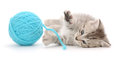 Cat With Ball Of Yarn Royalty Free Stock Images - 32801689