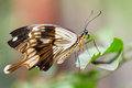 Tropical Butterfly Royalty Free Stock Images - 32811919