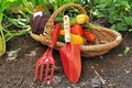 Tools And Vegetables In Basket Royalty Free Stock Image - 32825856