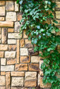 Ivy On The Stone Wall Royalty Free Stock Photo - 32828015