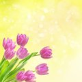 Tulip Flowers Background Stock Photography - 32835822