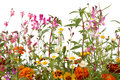 Mixed Wild Field Flowers Royalty Free Stock Photo - 32836785