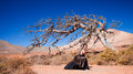 Flamenco And A Dead Tree Royalty Free Stock Photography - 32850297