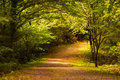 Peaceful Romantic Forest Stock Images - 32862774