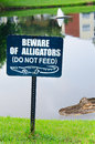 Beware Of Alligators Sign With Alligator In Lake Royalty Free Stock Image - 32874796