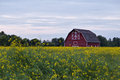 A Red Barn In A Canola Field Royalty Free Stock Image - 32896146