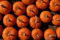 Pumpkins For Sale Royalty Free Stock Photo - 3293615