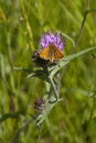 Small Skipper Butterfly Stock Photo - 32914440