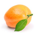 Apricot Isolated Royalty Free Stock Images - 32920609