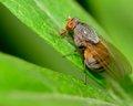 Fly On A Plant Stock Photography - 32939132