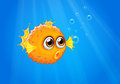 An Ugly Puffer Fish In The Ocean Stock Photos - 32941783