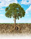 Cross Section Of Soil Showing A Tree With Its Roots. Stock Image - 32969491