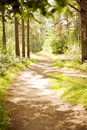 Bright Sun Path In The Woods In Summer Stock Photography - 32969922