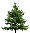 Bare Christmas Tree Royalty Free Stock Image - 3309126