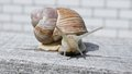 Large Snail On A Wooden Board In The Garden Stock Photo - 33014420