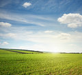 Green Meadow And Blue Sky Royalty Free Stock Photo - 33016565